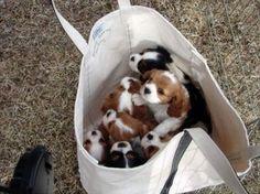 Bag of puppies, anyone?