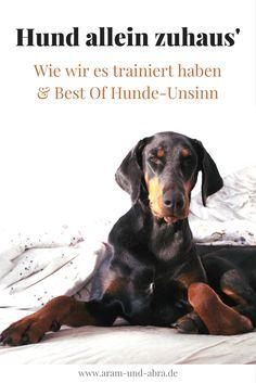 Hund, Hundetraining, Alleinbleiben, Hundeblog, Dobermann, Aram und Abra