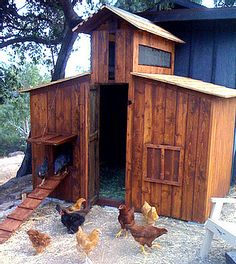 I love the narrow, tall door on this coop.  The wood is beautiful and the chickens sure look happy to call it home!