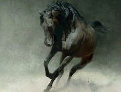wild horses - runing, black, dust, horse, animal