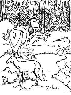 Pin by johanna piiroinen on v rityskuvia pinterest pet - Colorazione pagine animali zoo ...