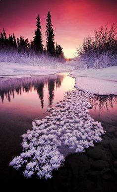 Alaska Winter sunset (Wall - instead of floating snow clumps, think flowers) All Nature, Amazing Nature, Science Nature, Winter Sunset, Winter Scenery, Alaska Winter, Winter Snow, Winter Colors, Beautiful World