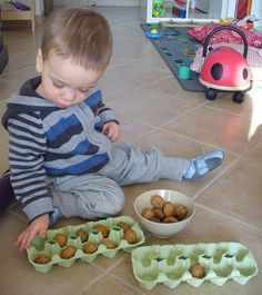 Free exploration: placing, sorting, dividing nuts