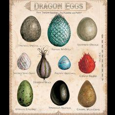 Uova di Drago -  illustrazione di Jim Kay da Harry Potter and the Philosopher's Stone Ed.Bloomsbury