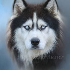 Title Siberian Husky Artist Lena Auxier Medium Digital Art & Digital Painting Siberian Husky by. The post Siberian Husky by Lena Auxier appeared first on Bruce Kennels. Animal Paintings, Animal Drawings, Husky Drawing, Cat Drawing, Dog Portraits, Dog Art, Dog Pictures, Dog Photos, Dog Life