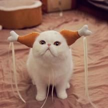 Cats That Look Suspiciously Like Thanksgiving Turkeys