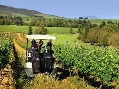 Devonvale Golf & Wine Estate is a world class championship golf course, working wine farm and residential estate offering upmarket accommodation, conferencing & Somerset West, Best Golf Courses, South Africa, Wine, World, Gallery, Pictures, Photos, Photo Illustration