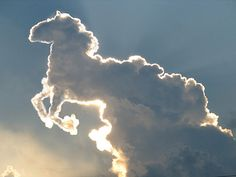 Clouds shaped like a horse!Totally awesome Gods great art work.Just WOW..............♥♥♥♥