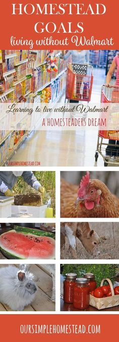 Homesteading Goals - Can it be done? Do we really think we could spend the rest of our life never walking into a big box store? That's our dream…right there out in the open — we want to live WITHOUT Walmart!