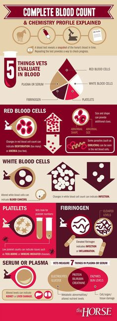 What Does Your Horse's Blood Test Mean? Reading a blood test can be confusing. Here's a helpful infographic developed by that describes a typical blood test and what it's results might mean for your horse. Don Du Sang, Vet Tech Student, Vet Assistant, Office Assistant, Medical Laboratory Science, Pet Vet, Vet Clinics, Animal Science, Veterinary Medicine