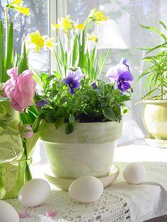 Speciaal Voor Pasen. In de vensterbank. Voorjaar!