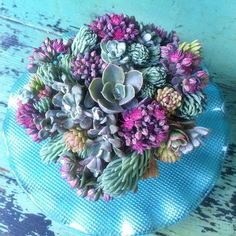 """A swirl of succulent """"frosting"""" on top of a cupcake made of Floral Soil. Excited about the launch of their Indiegogo campaign in the coming days!"""