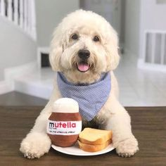 Spreading happiness with Mutella Your pup will be super excited to get its paws on this tasty jar of Mutella! Lets Taco Bout It, Cuddle Buddy, Late Night Snacks, Dog Gifts, Dog Toys, Pet Portraits, Nutella, Are You Happy, Cocoa