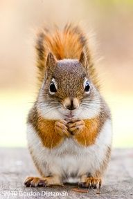 Red Squirrel mama latte with extra foam. Pumpkin machiada?