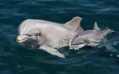#BOTTLENOSE DOLPHINS FOUND WITH #RECORD-HIGH LEVELS OF #MERCURY...