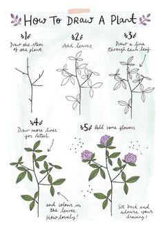 Pflanze | Drawing Tutorials, Art Tutorials, Drawing Ideas, Drawing Tips, Drawing Techniques, Drawing Board, Drawing Stuff, Flower Drawings, Botanical Drawings