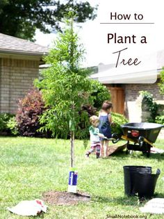 How to Plant a Tree via Small Notebook...and she lives in North Texas