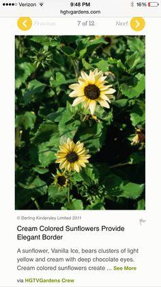 Like these sunflowers