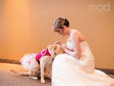 Binnenkort een bruiloft? 10 trouwfoto's van gelukkige stelletjes samen met hun geliefde hond! - Zelfmaak ideetjes