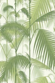 Cole & Son - Contemporary Restyled - Palm Jungle Wallpaper - Green 951001
