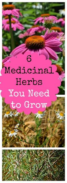 6 Medicinal Herbs to Grow in Your Backyard » Family Growing Pains My six favorite medicinal herbs you can grow in your herb garden. They're perfect for natural, home remedies.
