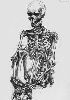 Human Skeleton Draw