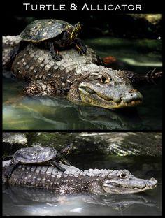 animais pensei que eles só poderiam ser amigos com sua própria espécie ...