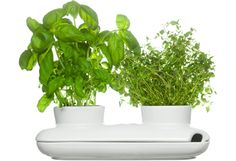 Sagaform watering pot keeps your herbs fresh and tidy. Watering the herbs is easy thanks to the pot´s design: one corner is open and allows you to pour water in. Luz Natural, Houzz, Bouquet Champetre, Plastic Plant Pots, Pot Pasta, Herb Pots, Pot Sets, Dot And Bo, Fresh Herbs
