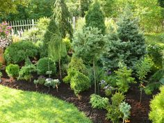 6 Creative Tips AND Tricks: Garden Landscaping Layout Plants small garden landscaping tutorials. Privacy Landscaping, Home Landscaping, Front Yard Landscaping, Evergreen Landscape, Evergreen Garden, Garden Shrubs, Lawn And Garden, Landscape Design, Garden Design