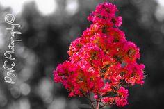Last of summer #Photo #Photography #Photoblog #Photoart #Flowerphotography #Flowerphotos #ThePhotoHour #PNEPhotography