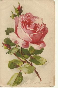 Painted Rose Postcard  Vintage