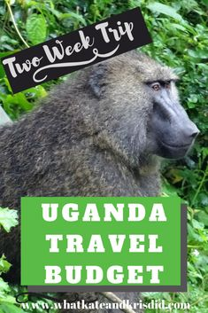 Uganda travel costs for our two week trip, including Uganda accommodation costs and expenses. If you are heading to do an independent trip to Uganda, our Uganda travel budget will help you work out how much you will spend. Travel List, Budget Travel, Travel Guides, Uganda Travel, Africa Travel, Gorilla Trekking, Europe On A Budget, Plan Your Trip, Trip Planning