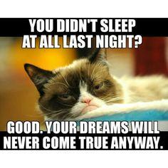 #grumpycat #grumpiercat #grumpy4life #tardarsauce #jesuisgrumpy