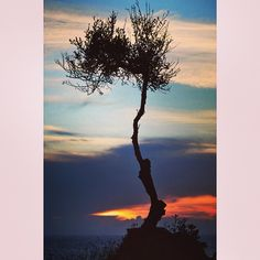 #corfu #olivetree #sunset (photo: @mstkt1cooper.)