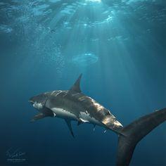 Great White Shark by Vitaly-Sokol.deviantart.com on @DeviantArt