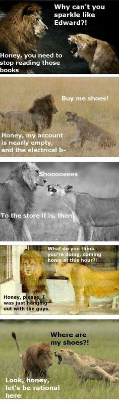 I don't know why this is so funny, but it is! The male lion is just like, okay please don't kill me.