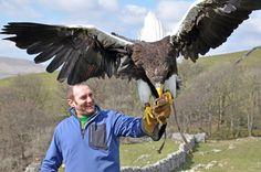 philippine eagle facts - Google Search
