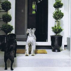 ArchiPups are always excited to go relax outside and inside their beautiful homes. Design your new dog-friendly home with Archipro Professionals & Suppliers. And build a gorgeous outdoor space with HEDGE GARDEN DESIGN & NURSERY. Garden Hedges, Family Garden, Nursery Design, Large Dogs, Dog Friends, Beautiful Homes, Garden Design, Relax, Space
