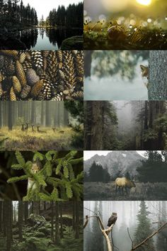 "ecosystems → temperate coniferous forest ""a terrestrial biome found in temperate regions of the world with warm summers and cool winters and adequate rainfall to sustain a forest. In most temperate coniferous forests, evergreen conifers predominate,..."