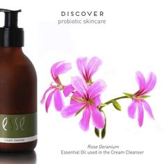 - This floral, slightly herbaceous oil has and anti-inflammatory properties, helping to relieve tension. Cleanser, Moisturizer, Rose Geranium Essential Oil, Essential Oil Uses, Geraniums, Fragrance Oil, Flower Tattoos, Aromatherapy, Health And Beauty