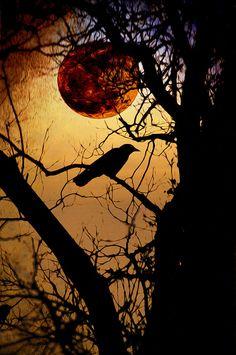 Raven Moon Photograph  - Raven Moon Fine Art Print