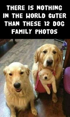 OMG, I just melted!!!! http://theilovedogssite.com/there-is-nothing-in-the-world-cuter-than-these-12-dog-families/
