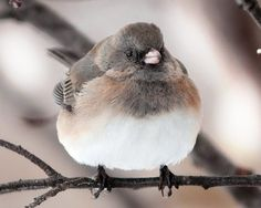 Fat birds are the cutest