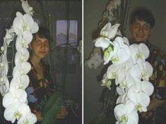 Így ültettem át az orchideám, azóta sem győzöm csodálni! Floral Wreath, Wreaths, Flowers, Painting, Milan, Gardening, Fotografia, Floral Crown, Door Wreaths