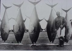 The real 'ol Men and the Sea! Sport Fishing, Best Fishing, Fishing Photography, Vintage Photography, Hobie Pro Angler 14, Tuna Fishing, Coarse Fishing, Fishing Photos, Vintage Fishing