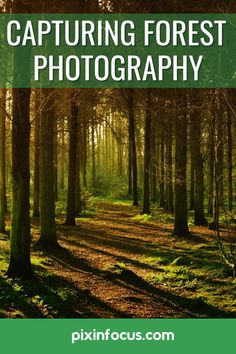 Forest photography is one of the most relaxing forms of photography. Using the right gear and settings is key to a great forest photograph. #forestphotographytips #forestphotography #forestphotographyguide Wildlife Photography Tips, Photography Terms, Forest Photography, Photography Tips For Beginners, Adventure Photography, Sunset Photography, Photography Tutorials, Amazing Photography, Landscape Photography
