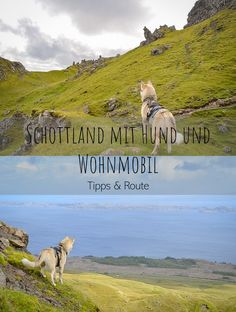 Scotland with dog and camper! - Urlaub mit Hund - The best tips for traveling to Scotland with dog and camper! Best Picture For van life interior F - Most Beautiful Pictures, Cool Pictures, Camping, Holiday Pictures, Scotland Travel, Dog Friends, Outlander, In The Heights, Places