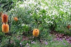 Australian bush garden