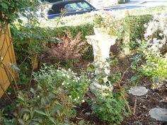 Hortensie 'little Lime®' | Creating Garden | Pinterest | Landscaping Gartnern Im Herbst Den Garten Fur Die Wintertagen Vorbereiten