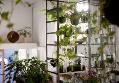 Where to Buy Cool Indoor Plants (and How to Keep Them Alive)